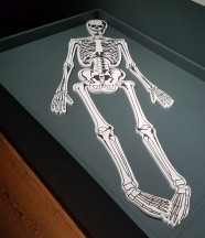 reassemble a skeleton, mus lon doc